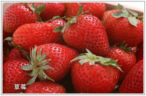 烟台草莓苗批发  草莓果专卖