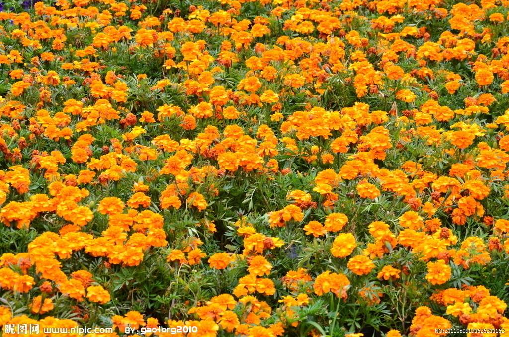 地被花卉ps素材