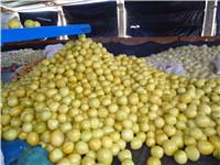 红中红蜜柚种苗供应商