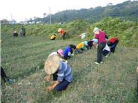 红中红蜜柚专业合作社苗木供应商