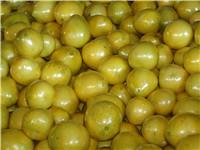 供应范围长江以南种植,福建省红中红蜜柚种苗供应