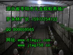 江苏价格实惠的壁虎养殖:壁虎供应