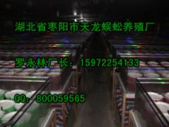 蜘蛛哪家买:信誉好的蜘蛛供应商就在南京