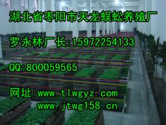 质量好的蜈蚣养殖市场价格,厂家供应特种动物养殖