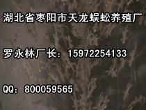 蚌埠壁虎——江苏价位合理的壁虎