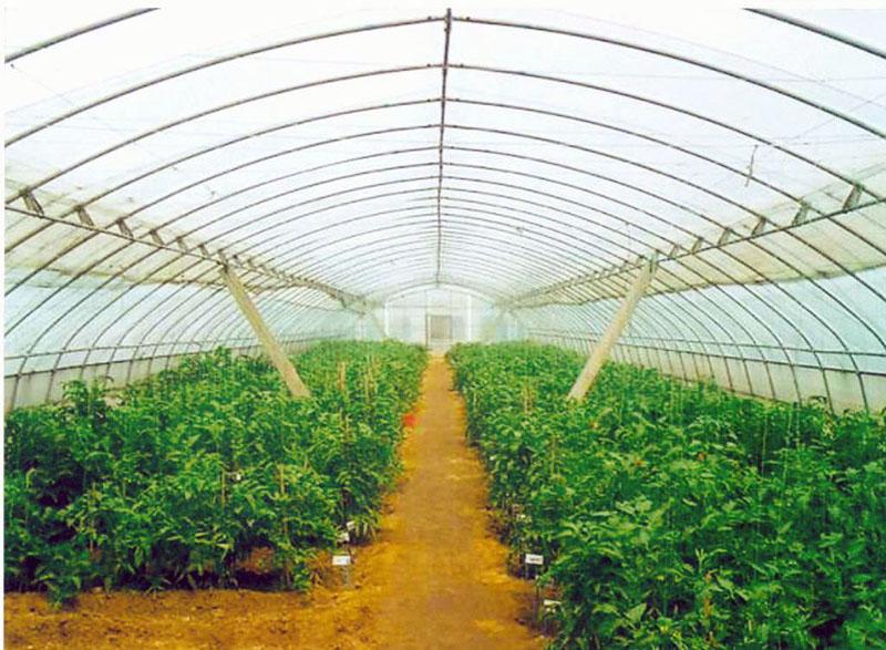值得信赖的蔬菜大棚建造