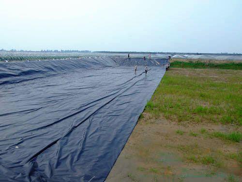 藕池土工膜价格|藕池防渗养殖膜专业厂商