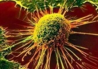 口碑好的NK细胞的活性和功能推荐