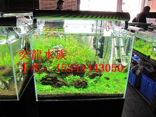 奕龍水族-生态鱼缸