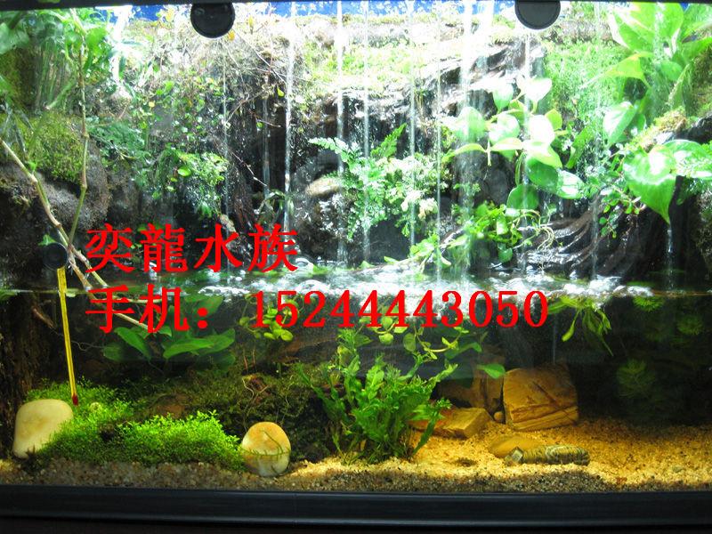 优质生态鱼缸-生态鱼缸定做