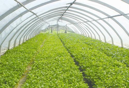蔬菜温室大棚造价