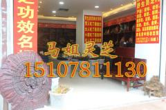 马姐灵芝王专卖实用的东南亚野生灵芝,值得您的信赖 广西东南亚野生灵芝产批发价格