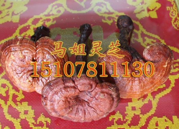 野生竹灵芝多少钱一斤——品牌好的野生竹灵芝低价出售