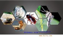 甘肃灭臭虫——想找放心的灭臭虫,康民环境科技公司是最佳选择