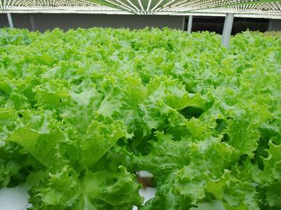 批发蔬菜加工,高性价蔬菜桃源农业发展有限公司供应