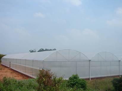 薄膜温室建造