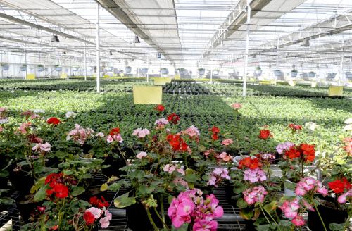 花卉大棚建造