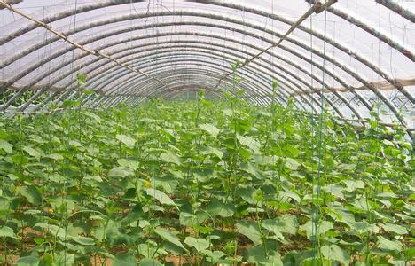 浙江连栋温室-富尔农业科技供应信誉好的连栋温室工程建造
