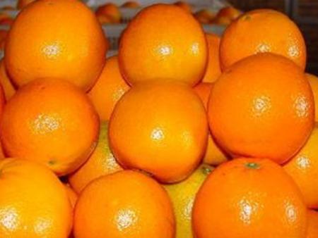 重庆雷波脐橙代理商:哪儿有火热畅销的雷波脐橙批发市场