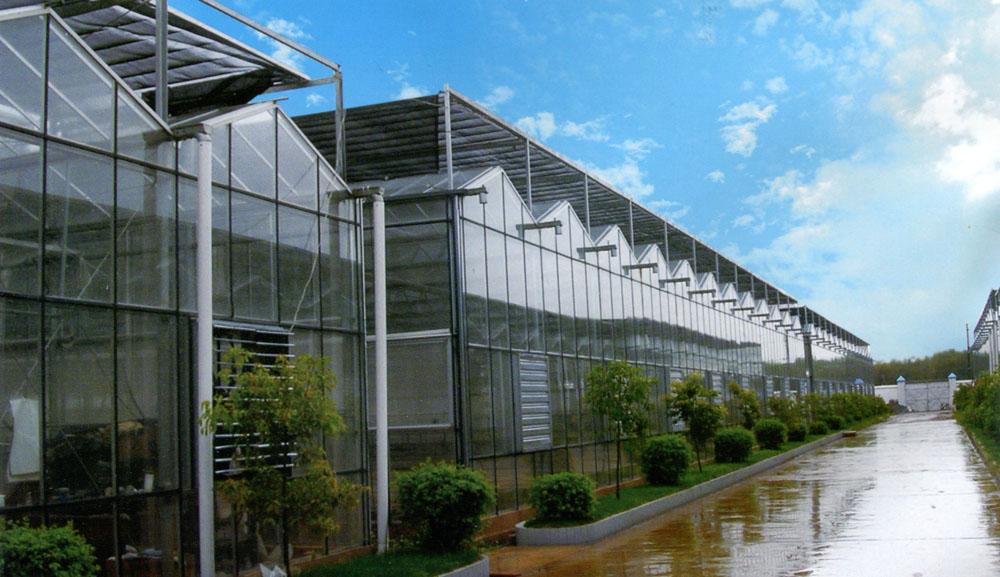 连栋温室价格范围 什么是连栋温室
