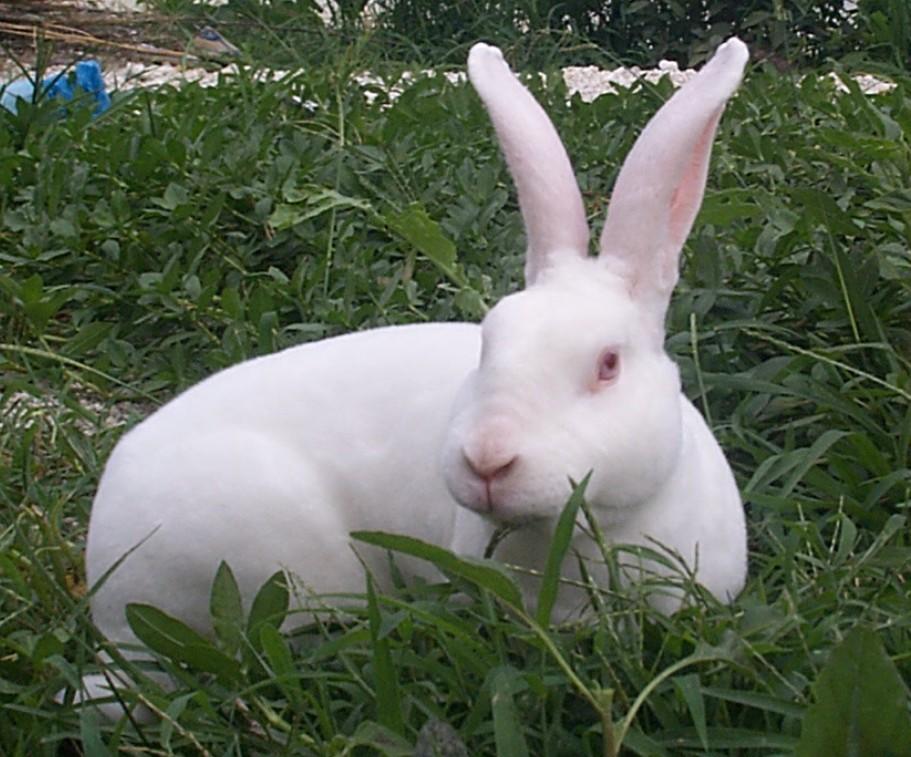 獭兔养殖中心