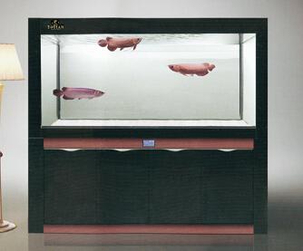 成都最好的鱼缸批发:南充鱼缸