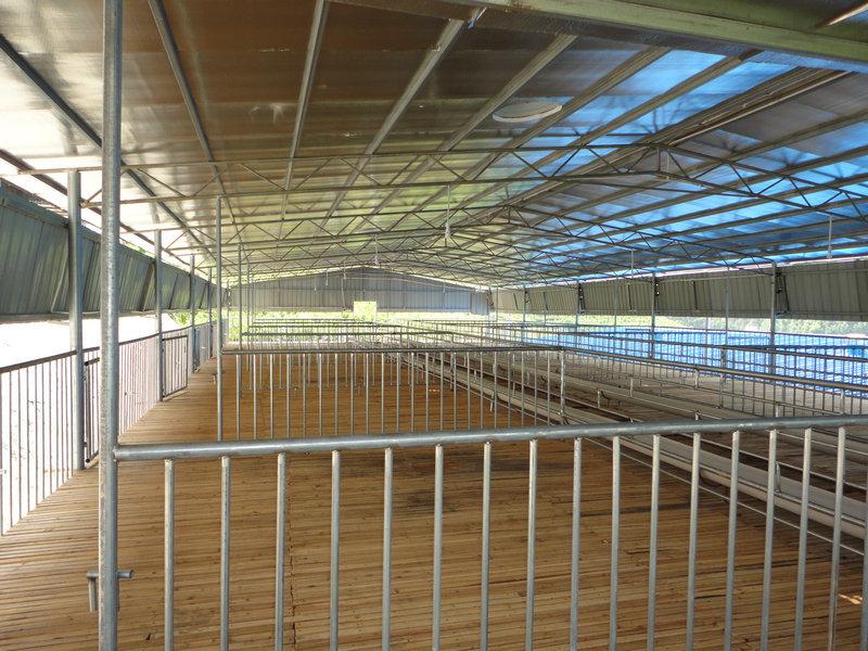 廣西黑山羊養殖場  黑山羊價格更優惠