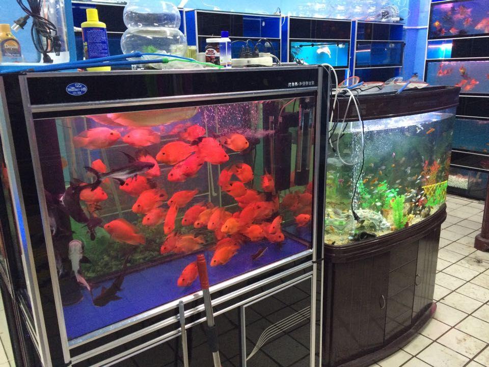 苏州知名生态鱼缸厂推荐|高新生态鱼缸报价