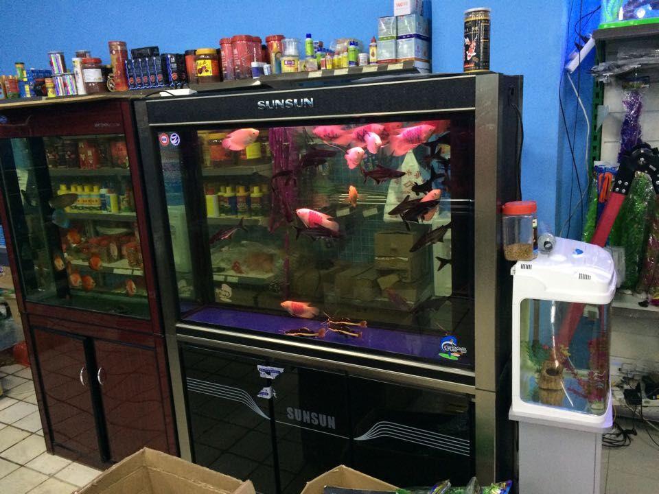 鱼缸哪里买比较好——杭州大型鱼缸