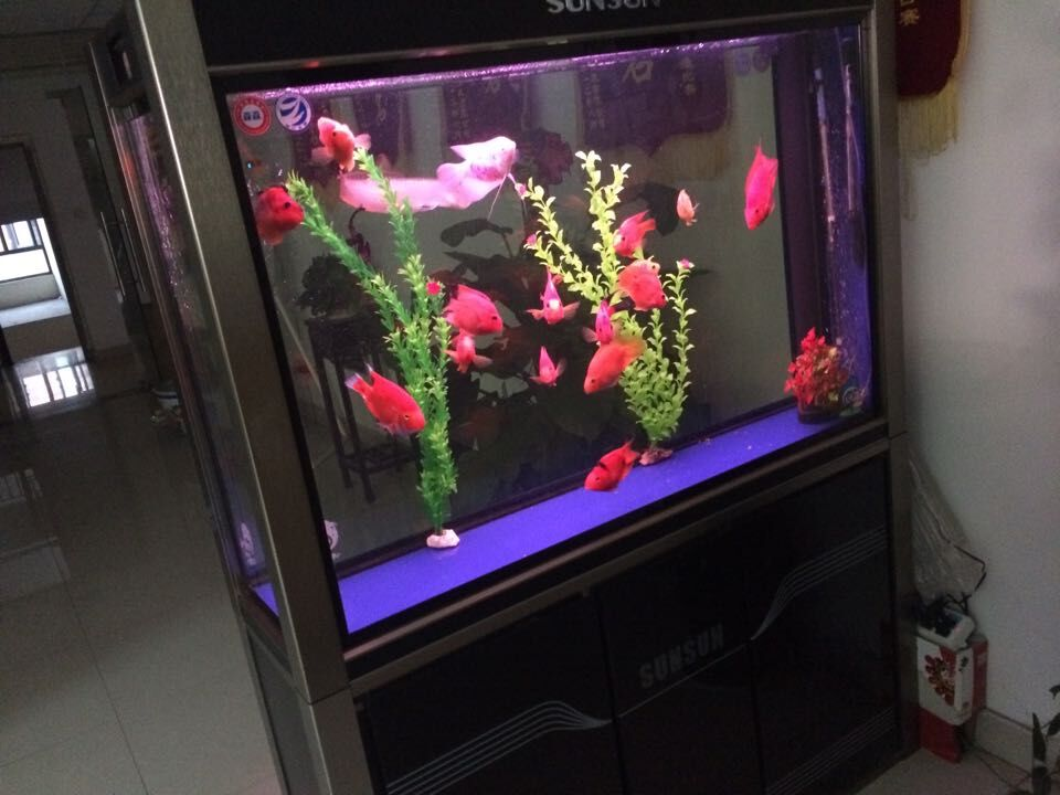揚州大型魚缸 供應蘇州特色的水族館