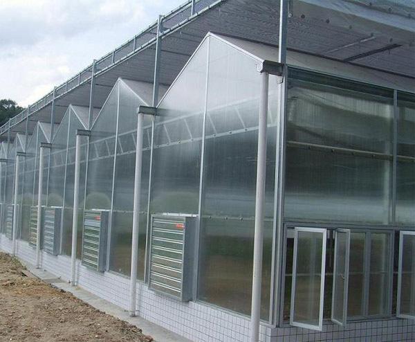 阳光板温室建造找青州盈丰!