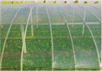 PO膜厂家-有实力的PO膜生产厂家就是首信农膜