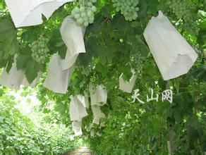 新疆专用葡萄套袋