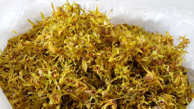 深圳鐵皮石斛花:廣西哪里可以買到好的鐵皮石斛花
