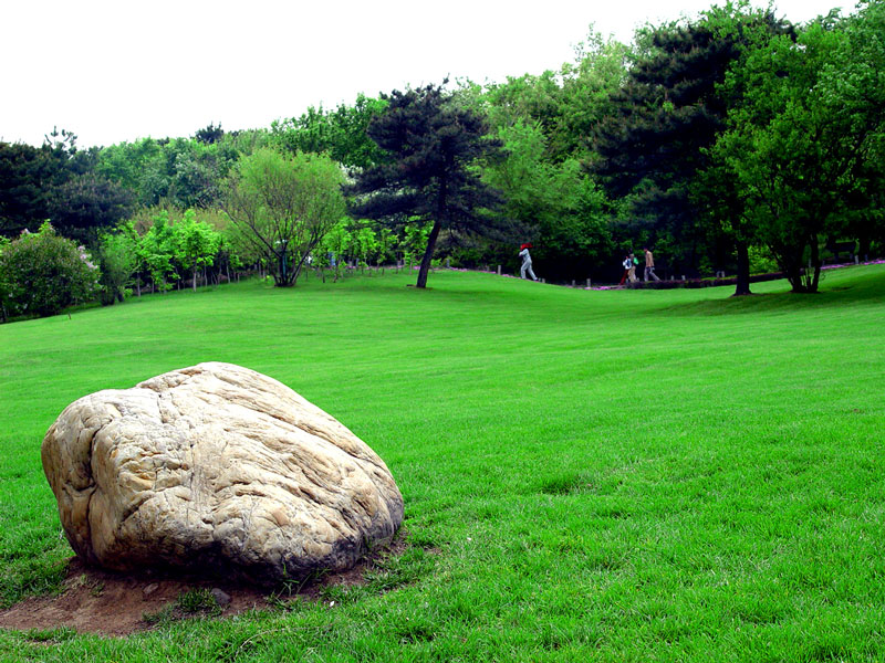 鄭州草坪批發 哪里能買到劃算的草坪