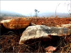 划算的园林景观石当选钟祥青云园林,荆门钟祥景观石