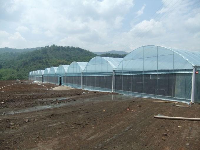百色大棚厂家-薄膜温室大棚造价是多少