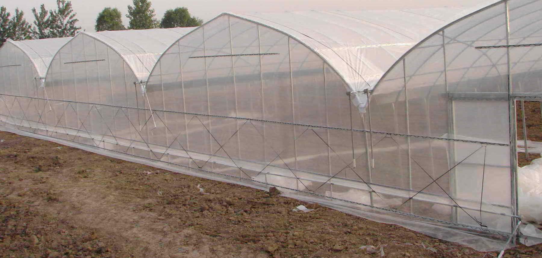 广西专业的薄膜温室大棚|广西大棚安装厂家