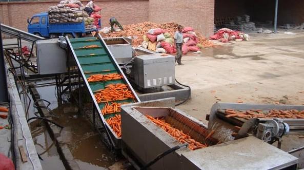 胡萝卜洗濯装备出产商-高性价胡萝卜洗濯装备那里有卖