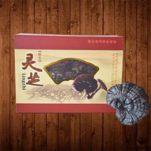 桂林野生靈芝 靈川海洋靈芝桂林養生優品