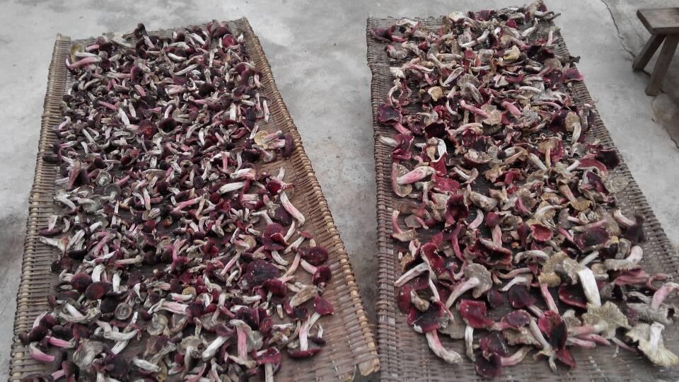 红菇价格—云南省红菇批发