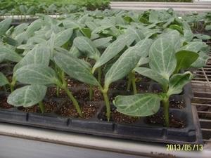 漳浦蔬菜育苗基土 想买�钍祷莸氖卟擞�苗基质,就到黑土农科