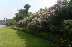 南宁信誉好的南宁绿地草坪养护公司是哪家 桂林园林绿化养护工程