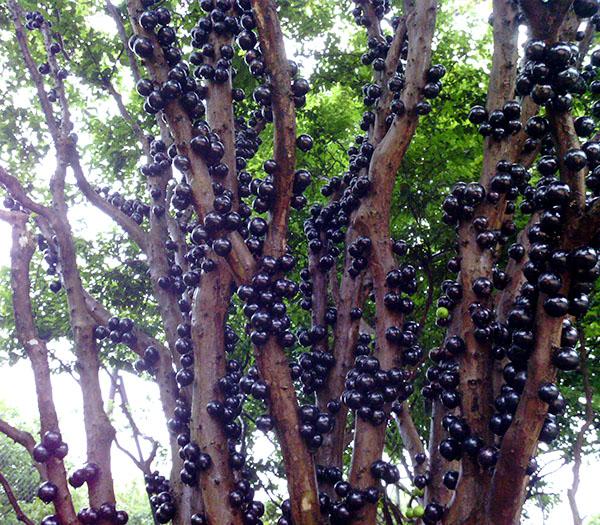 手绘山竹树