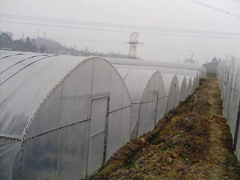 大棚防虫网批发,广西大棚材料厂家