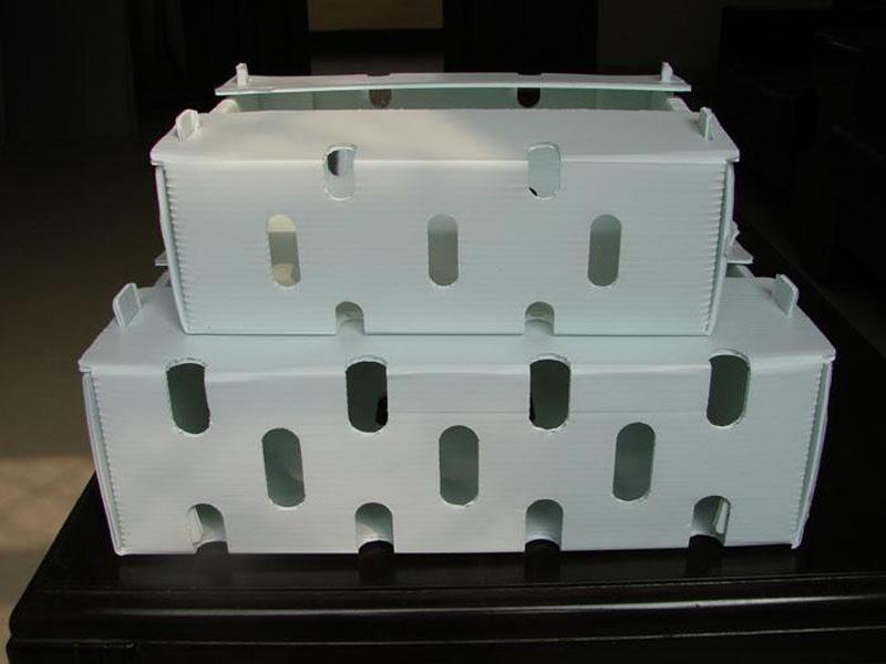 质量好的中空板水果箱当选辰邦塑料包装-水果箱供应商