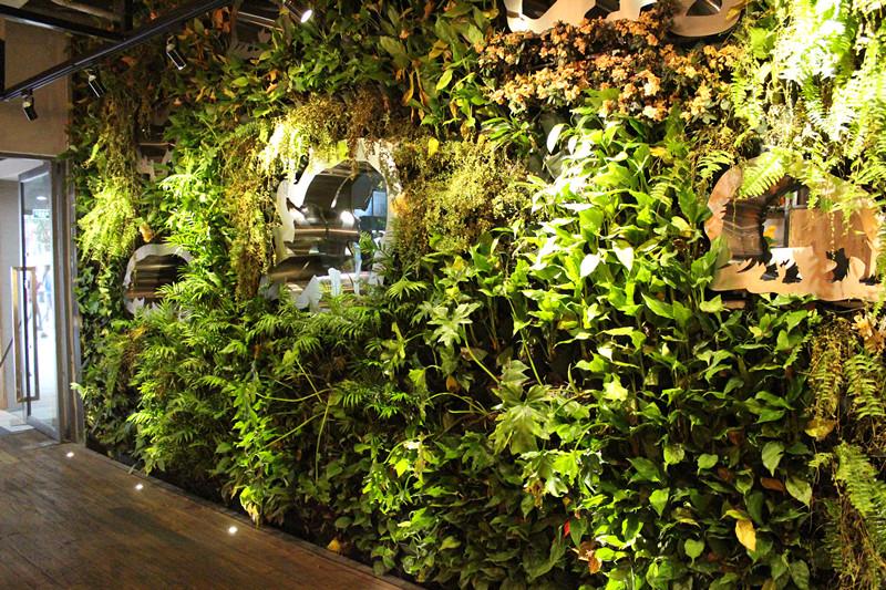 垂直绿化|立体绿化|墙体绿化|厦门垂直绿化植物墙-弈采园林