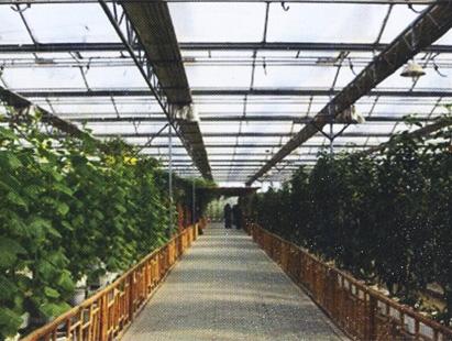 花卉大棚温室建造专业公司 设计园艺温室