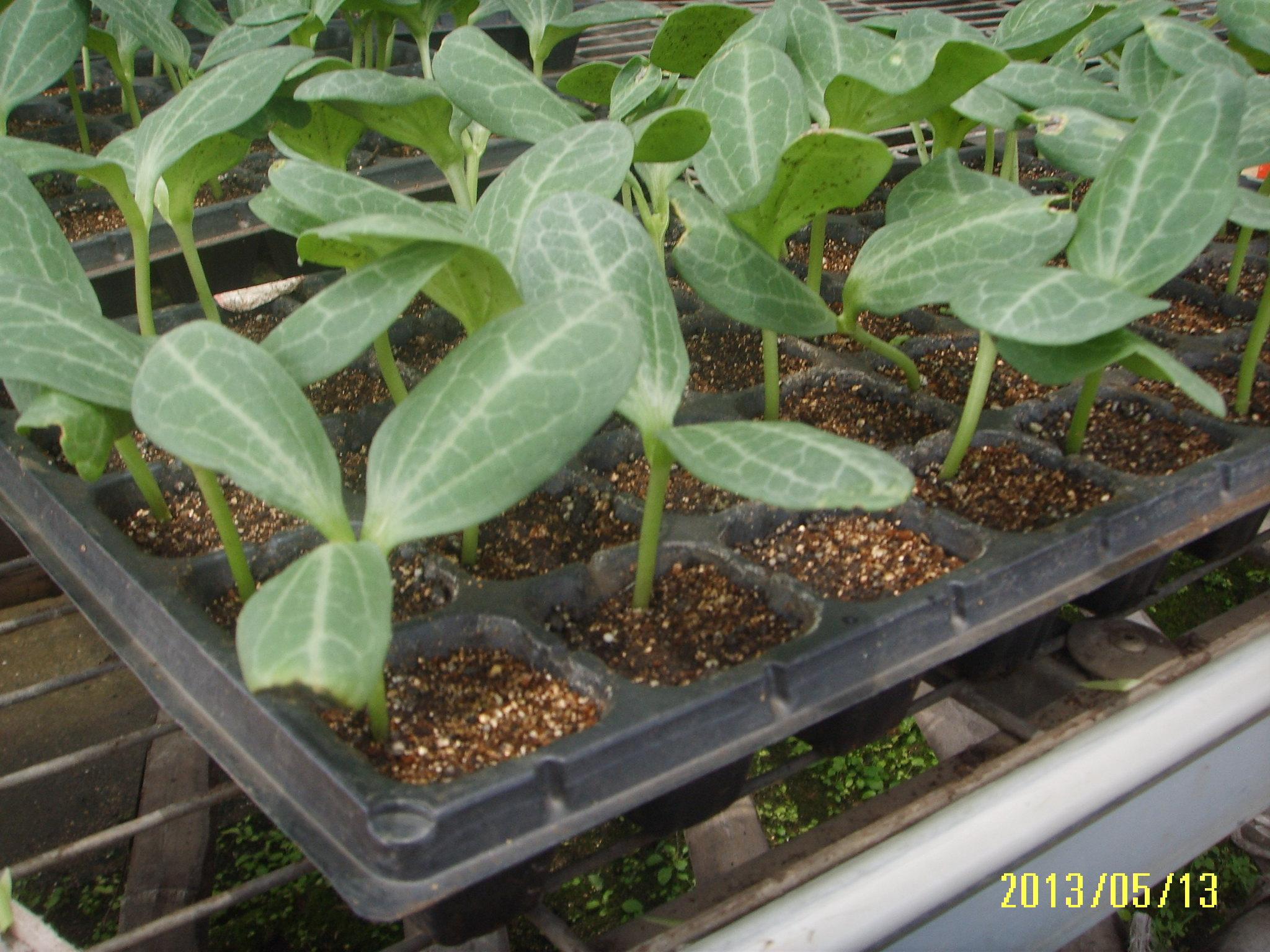 海南水培栽培系统 大量供应物超所值的泥炭土