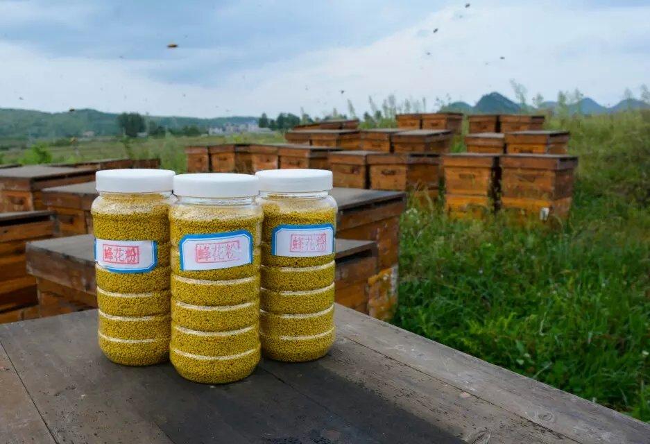 纯天然蜂花粉